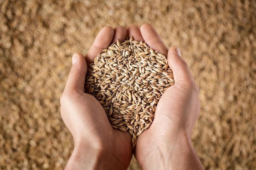 A good season ahead for grain-growing farmers