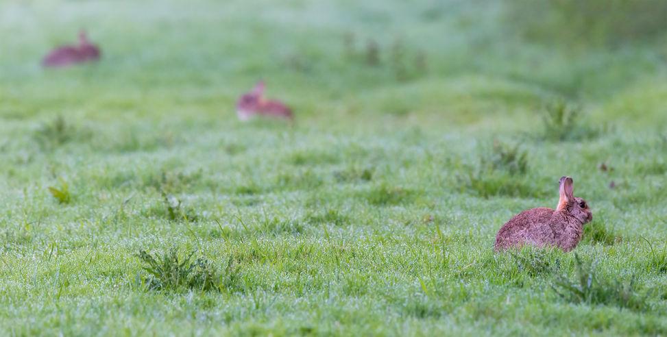 Pest Rabbit Management