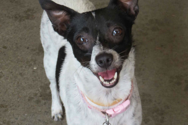 Article image for Pet of the week: Bonnie