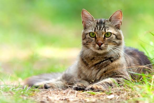 Council Crackdown On Cats