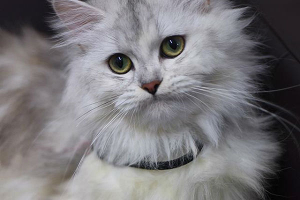 Article image for Pet of the week: Alice