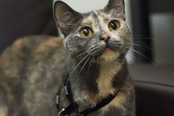 Article image for Pet of the week: Amber