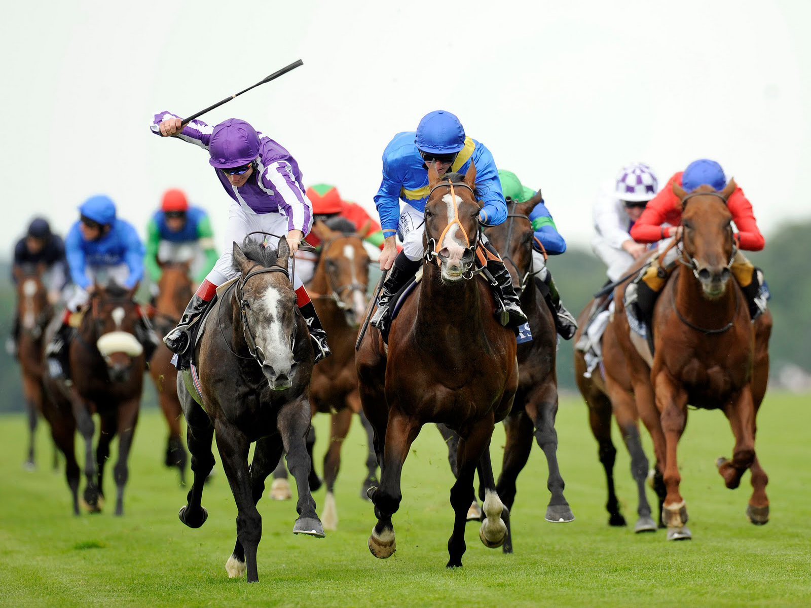 Is horse-racing too cruel to continue?