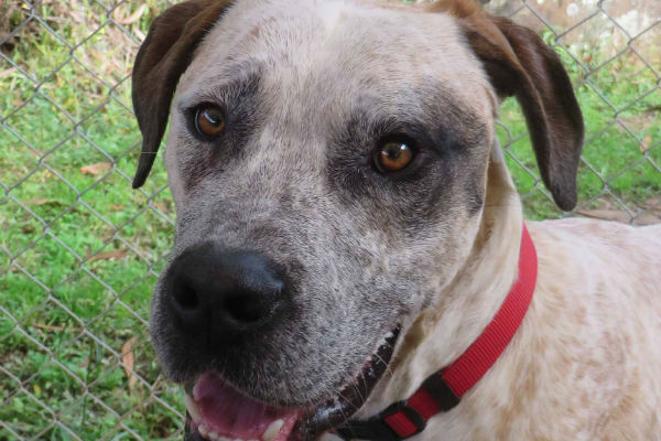 Article image for Pet of the week:  Albie