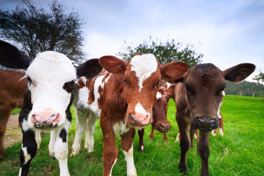 Mandatory dairy code endorsed by farmers