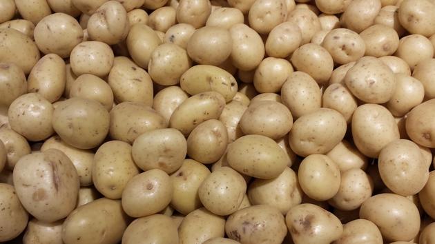 World Potato Day
