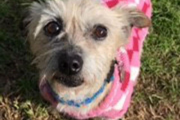 Article image for Pet of the week:  Priscilla