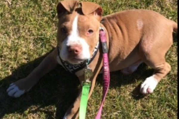 Article image for Pet of the week:  Blossom