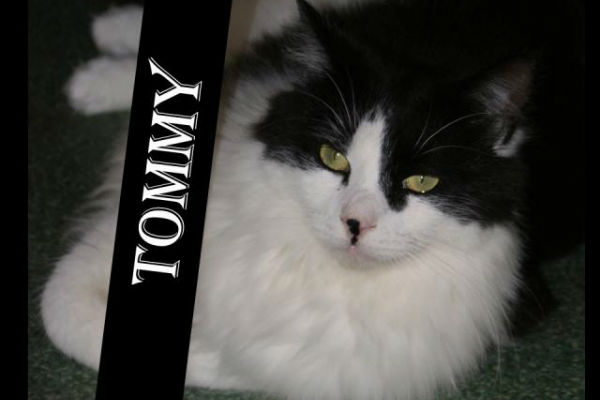 Article image for Pet of the week: Tommy