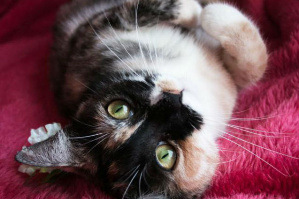 Article image for Pet of the week: Merida