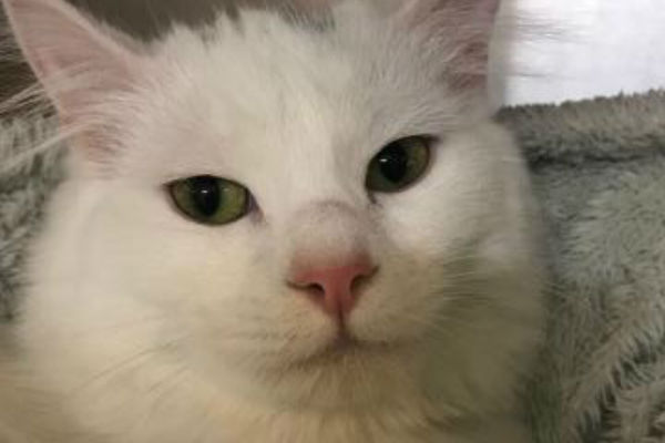 Article image for Pet of the week: Ellie