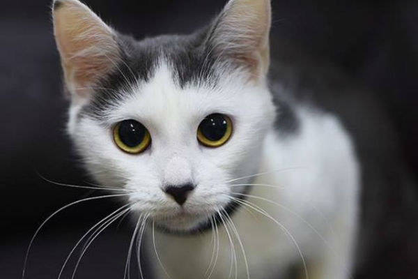 Article image for Pet of the week: Ari