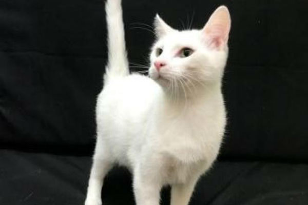 Article image for Pet of the week: Bowie