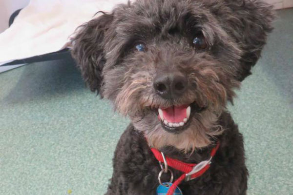 Article image for Pet of the week: Murphy