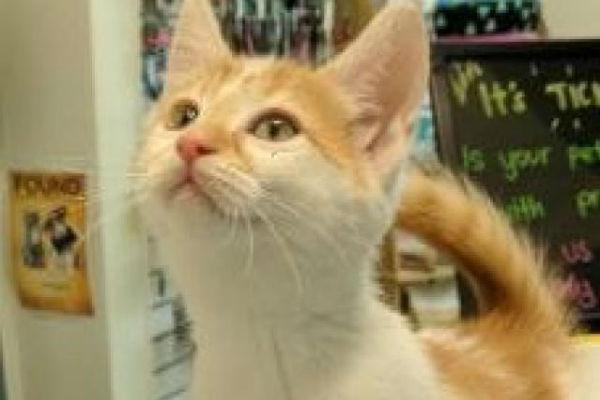 Article image for Pet of the week: Pretzel