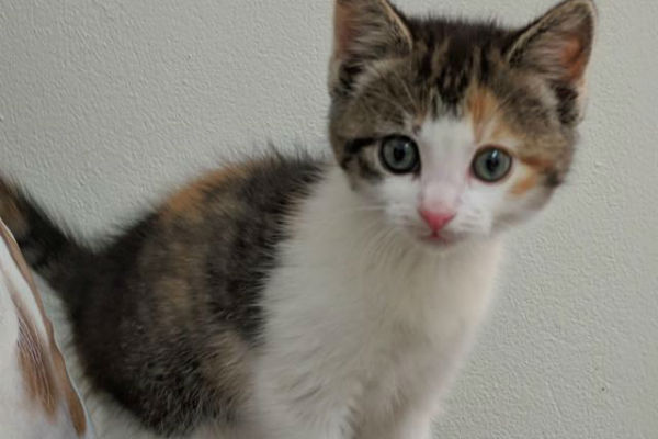 Article image for Pet of the week: Astra