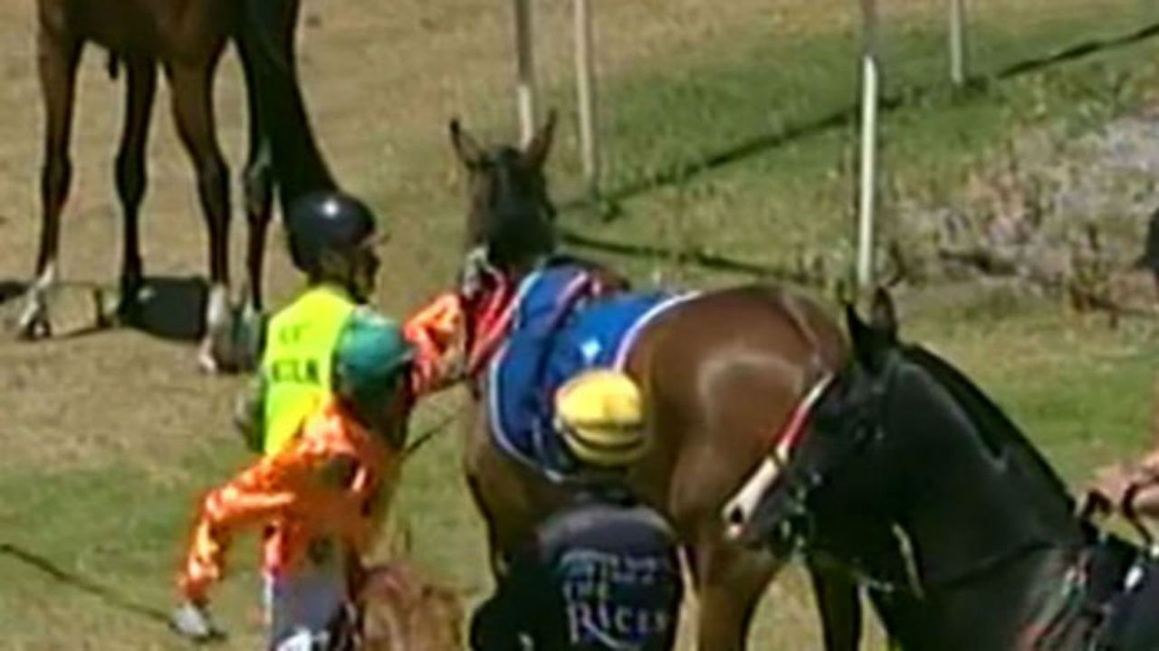 Are horses being abused in the racing industry?