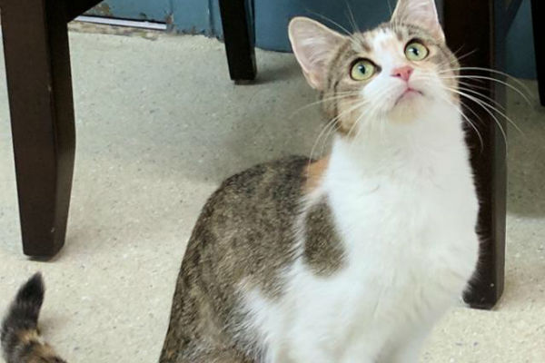 Article image for Pet of the week: Macey