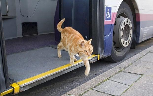 Should Pets Be On Public Transport?