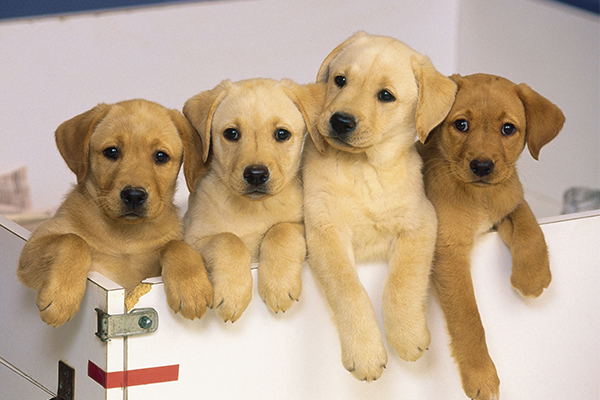 Article image for Government backs down on new laws that could target regular pet owners