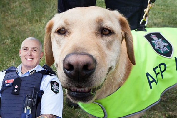 Meet the four-legged friends protecting our borders