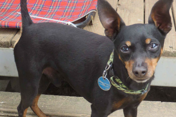 Article image for Pet of the week: Taz
