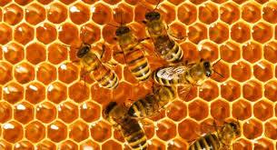 Honey Boom