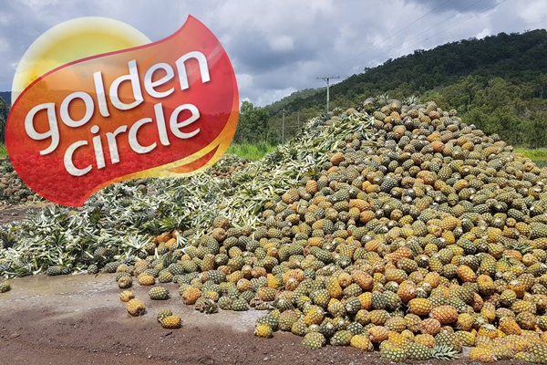 Article image for Tonnes of Aussie pineapples wasted due to factory closure