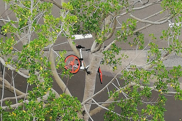 Dock-bike-tree