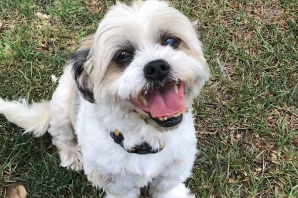 Article image for Pet of the week: Hamish