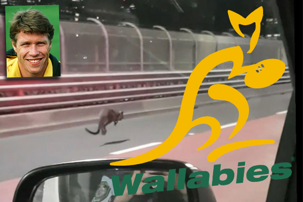 Article image for Former Wallabies captain helped capture runaway wallaby