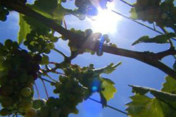 Wine industry a beneficiary of the Pan-Pacific trade agreement
