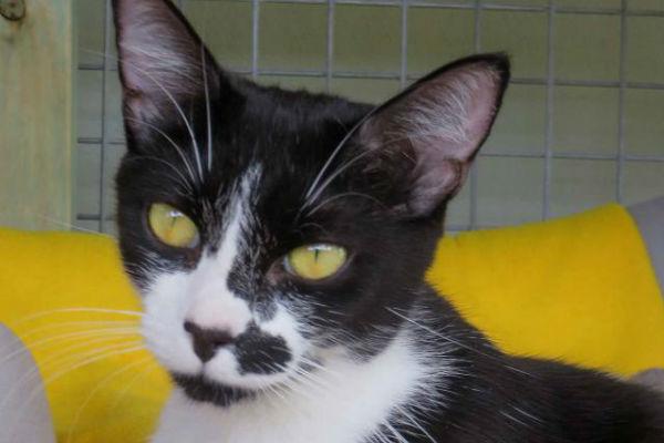 Article image for Pet of the week: Esmerelda