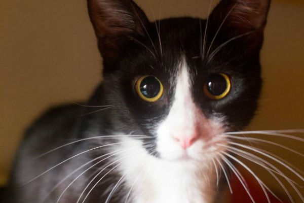 Article image for Pet of the week: Juliette