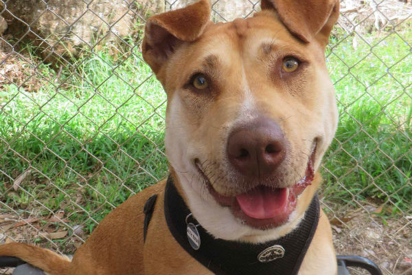 Article image for Pet of the week: Athena