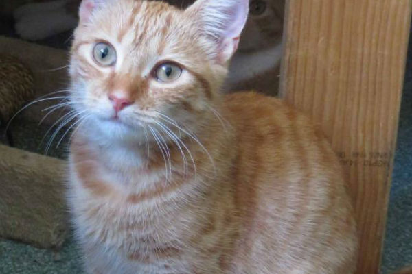 Article image for Pet of the week: Lady Marmalade