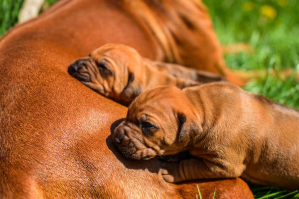 Article image for Government scraps animal breeding laws after pet owners revolt