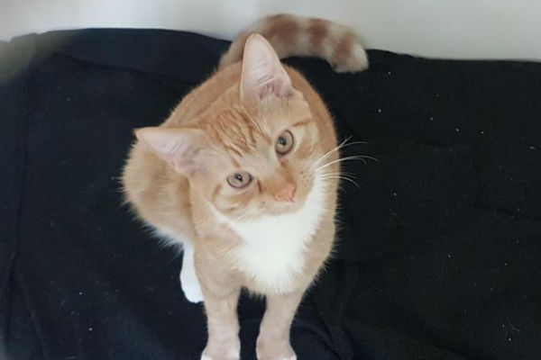 Article image for Pet of the week: Harrison