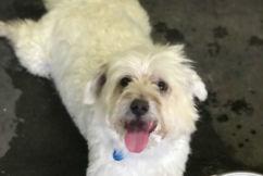 Pet of the week: Jeffrey