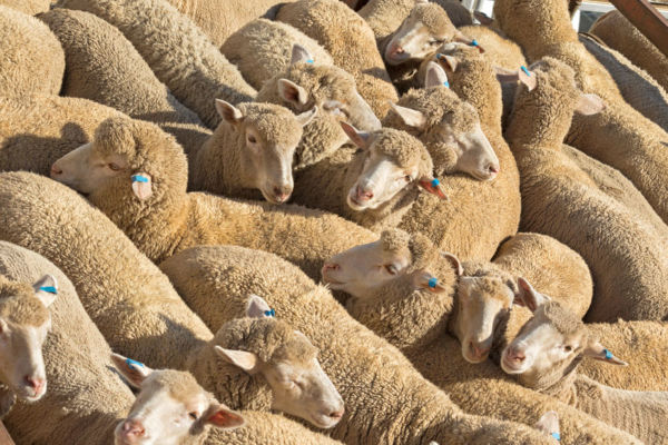Article image for Government not banning live exports anytime soon