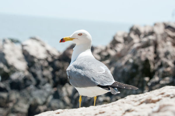 Article image for This restaurant is finally scaring off the pesky seagull and their method is genius