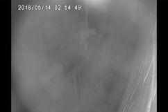 Pervert climbs through little girl's bedroom window