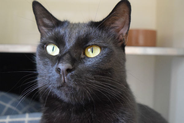 Article image for Cat Protection Society: Cat of the week