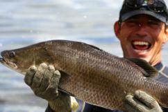 Aussie barramundi struggling to swim as foreign seafood floods the market