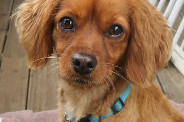 Article image for Pet of the week: Chuck