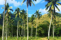 Steve Price takes lucky listeners on the trip of a lifetime to New Caledonia