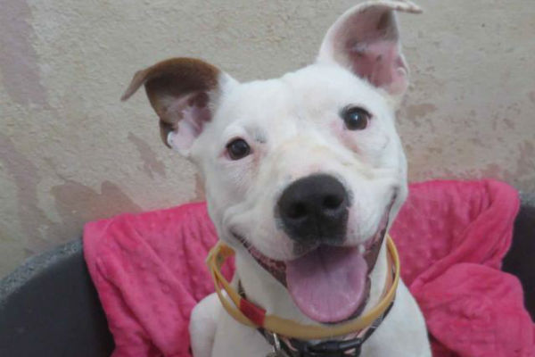 Article image for Pet of the week: Pearl