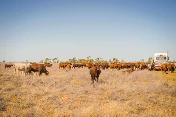 Article image for Farming crisis worsens: '90% of NSW effectively in drought'