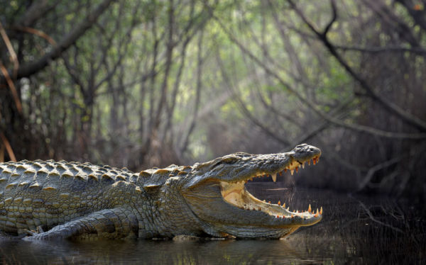 Article image for 'We want to claim back our waterways': QLD's renewed crocodile cull push