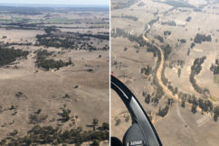 Former NRL player pushing for drought relief round to help devastated farmers